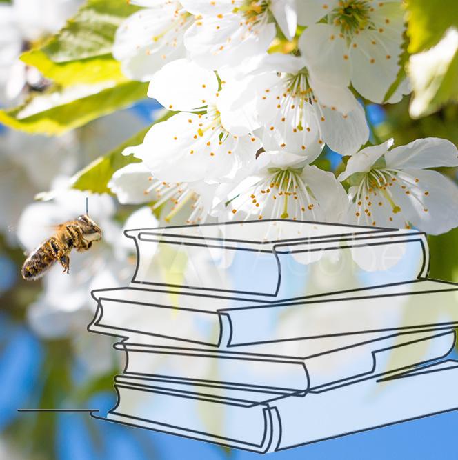 Bild Biene Obstbblüte Bücher