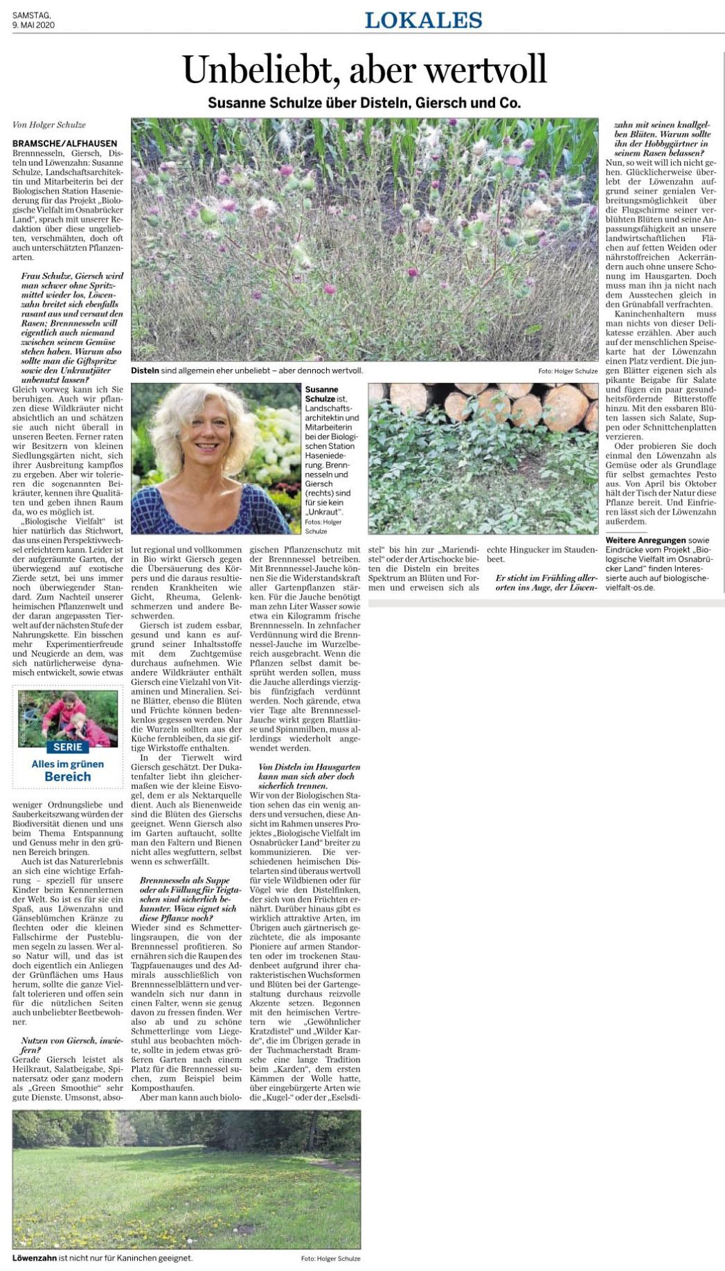 Zeitungsartikel über unbeliebte aber wertvolle Pflanzen