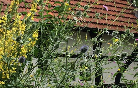 Schotterbeet mit wenigen kleinen Pflanzen